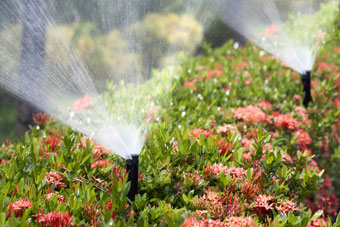 sprinkler with colorful flowers